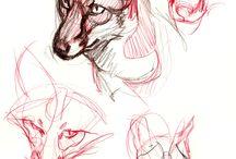 lobo perfil