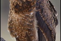 OWLS  /EAGLES AND OTHER BIRDS / OWLS  /EAGLES AND OTHER BIRDS