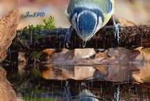 ptaki - GIF