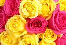 <3 Beautifull Flowers <3