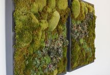 Wall Art using plant material