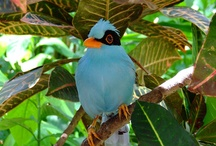 Explore: Beautiful Colorful Birds / by Robin