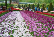 Flower Power in Keukenhof / Tulips in Keukenhof, May 2014