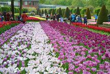 Flower Power in Keukenhof / Tulips in Keukenhof, May 2014