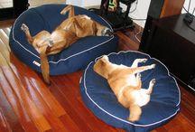 Medium Dogs / Average sized dogs on Barka Parka pet beds