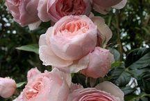 Rózsák a kertben