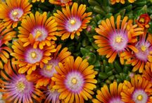 New for 2012 / www.gardencrossings.com your online source for new and unique annuals, perennials, and shrubs. Here are a few new plants that we are excited for!