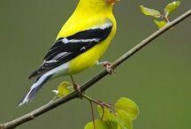 Birds | Songbirds