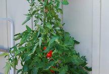 Urban Gardening / Don't have a yard?  Not a problem!  Start a deck garden!