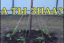 Мой любимый огород / Как выращивать овощи, как экономить место на огороде, как увеличить урожай.