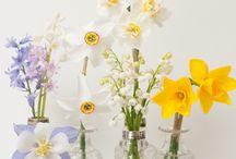 Spring Flowers / Spring fever