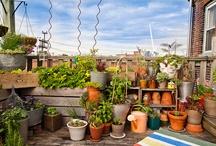 Urban Farming and Gardens
