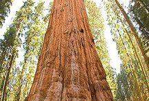 Árvores - Belezas da Natureza!