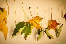 Herbstfreuden / 0