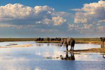 Chobe, Botswana / Read more on the region our website - http://www.zambezitraveller.com/destination/chobe/profile