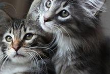 cats&otheranimals