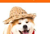 HAWAII DOG NAMES