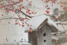 Pássaros e suas casinhas