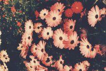 O P T I O N # 7 / Photo collage likes I N S P I R A T I O N / by i s a b e l s k i b s t e d