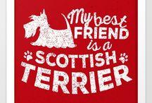 I  scottish terriers