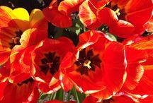 Flowers / Flowers photo