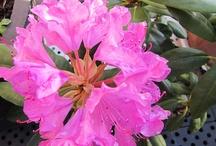 The flower side