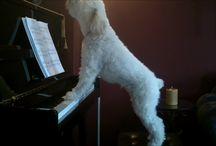 Funny Piano
