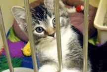 Help Affording Spay or Neuter! / A list of programs that work with Pets In Stitches to help defray costs of spays and neuters.