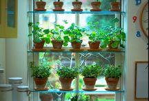hortas e plantios