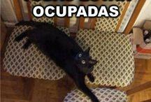 Chistes de gatitos