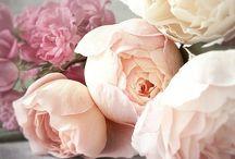 Forever Floral / by Elisha