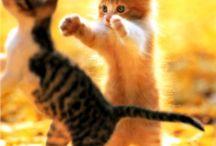 love cat