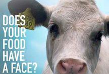 animal equality <3 / vegan