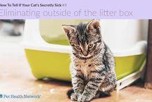 Cat's health