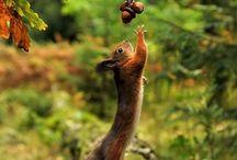 My favourites ... Squirrels ...