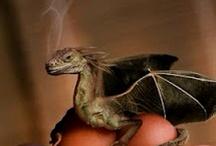 Rawr Dragons