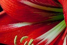 Kvety predlohy