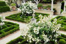 Borház kert