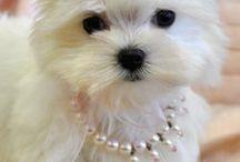Bijoux pour chien