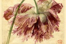 Botanicals / by Kim Thompson