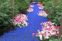 Gardening / Flowers and landscaping