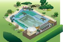 pools with natural filtration
