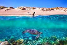 Monkey Mia, Ningaloo Reef and Exmouth Seven Day Tour / Highlights of the tour that brings you up close to Australia's Coral Coast
