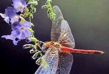 Libellen und Schmetterlinge