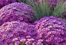 Gardening / Such great joy our gardens bring us. / by Nuru