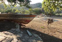 MUĞLA-Taşlıca Köyü
