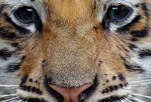 Wild Baby Cats / All types of wild baby felines.
