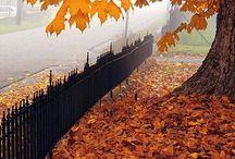 Autumn ♡