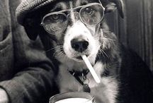 Stylish Dogs / All kinds of stylish & fashionable dogs could be found here.Have a look and Cheersssss!!!!!