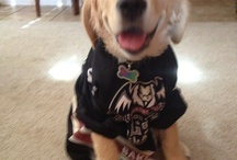 Pets of Condorstown / by Bakersfield Condors